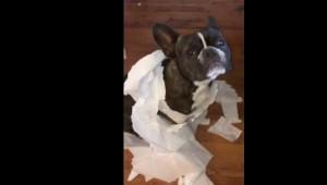 """""""Yo no fui, fue el"""": perro que delata a su """"amigo"""" por hacer una travesura se hace viral en redes sociales"""