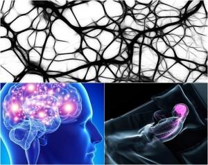 10 datos sorprendentes que no conocías del cerebro humano
