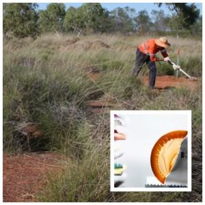 Crean preservativos ultrafinos y resistentes a base de una hierba nativa australiana