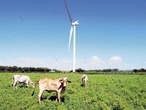 En los próximos dos años la República Dominicana será líder latinoamericano en energía de viento.