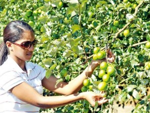 Yily Martínez, técnico del Idiaf, se involucra cada día en los distintos procesos que envuelven la producción del ponseré.