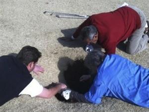 Hank Martínez, arriba, Ed Magaletta, derecha, y Russ Nobbe observan a través del socavón en el que cayó el golfista Mark Minhal mientras jugaba en la campo Annbriar de Waterloo, Illinois. Imagen  de golfmanna.com.