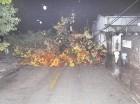 Las lluvias hicieron colapsar un árbol en la Núñez de Cáceres.