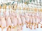 En diciembre aumenta la oferta y el consumo de pollo fresco.