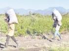 Las declaraciones sobre los haitianos se dieron en rueda en prensa en la JAD.