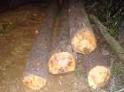 La minera asegura ha plantado árboles en las cuencas del Yuna y Jagüey.