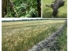 Daños ocasionados por la naturaleza a productores agropecuarios.