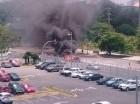 Yipeta incendiada. (Foto cortesía de José Urtecho @capiurtecho).