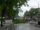 Varios árboles fueron derribados por el viento que provocó la tormenta.