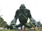 Como medida preventiva, la Alcaldía del Distrito Nacional amarró a los animales del Zooberto, en la avenida Los Próceres, principalmente al gigante King Kong.