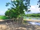 El principal río es ocupado por para la siembra de arroz y guineos.