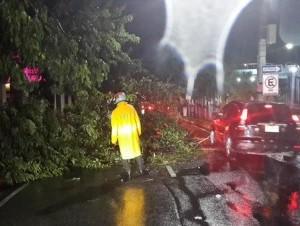 Árbol derribado por la tormenta de anoche. Los agentes de la Amet se presentaron al lugar a viabilizar el tránsito y a retirarlo.