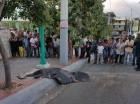 Franklin Astacio Polanco, muerto supuestamente a manos de un chofer de guaguas de Los Ríos, yace entre la acera y el pavimento en en parque de la zona.