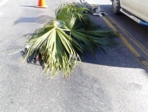 Motorista muere atropellado por una patana