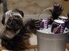 """El """"Puppymonkeybaby"""" en el anuncio de Mountain Dew que estrenó en el Super Bowl 50."""