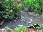 Aguas cloacales afectan a moradores del sector Los Rieles.