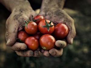 La soberanía alimentaria familiar y la seguridad alimentaria están limitadas por la falta de políticas públicas.