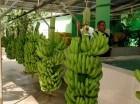 El mercado europeo demanda más productos y eso beneficia a los dominicanos.