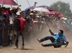 Un competidor cae de su burro durante una competencia preliminar en la Feria Nacional del Burro en Otumba.